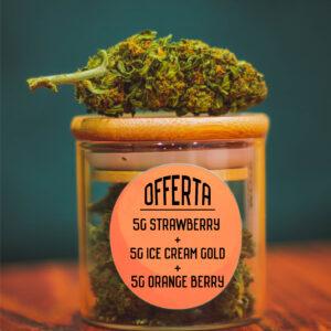 offerta-15g--strawberry-ive-cream-gold-orange-berry-shop-infiorescenze